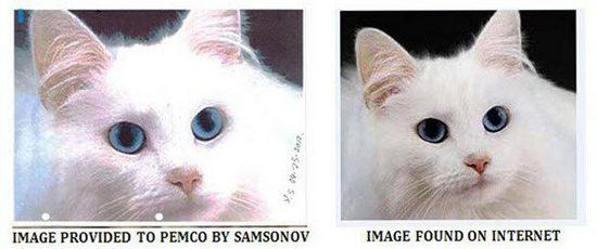Мошенник пытался обмануть страховую компанию с помощью кошки из интернета