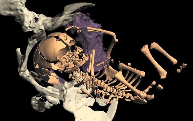 original Ученые ищут авантюрную женщину для вынашивания ребенка неандертальца
